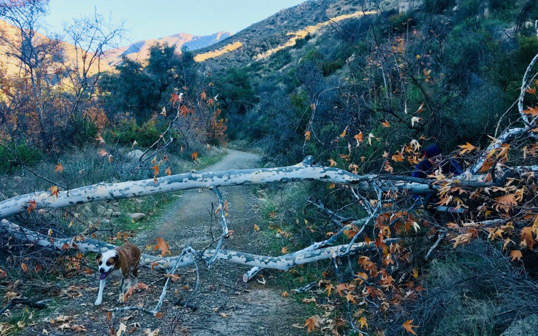 Downed Tree Removal – Sisar Canyon